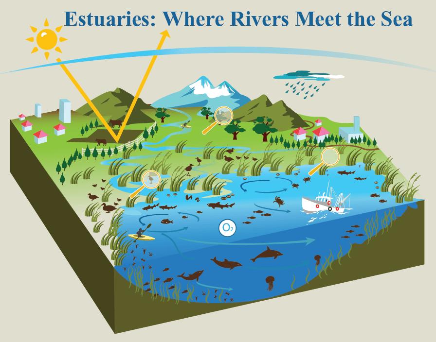 Estuary (NOAA)