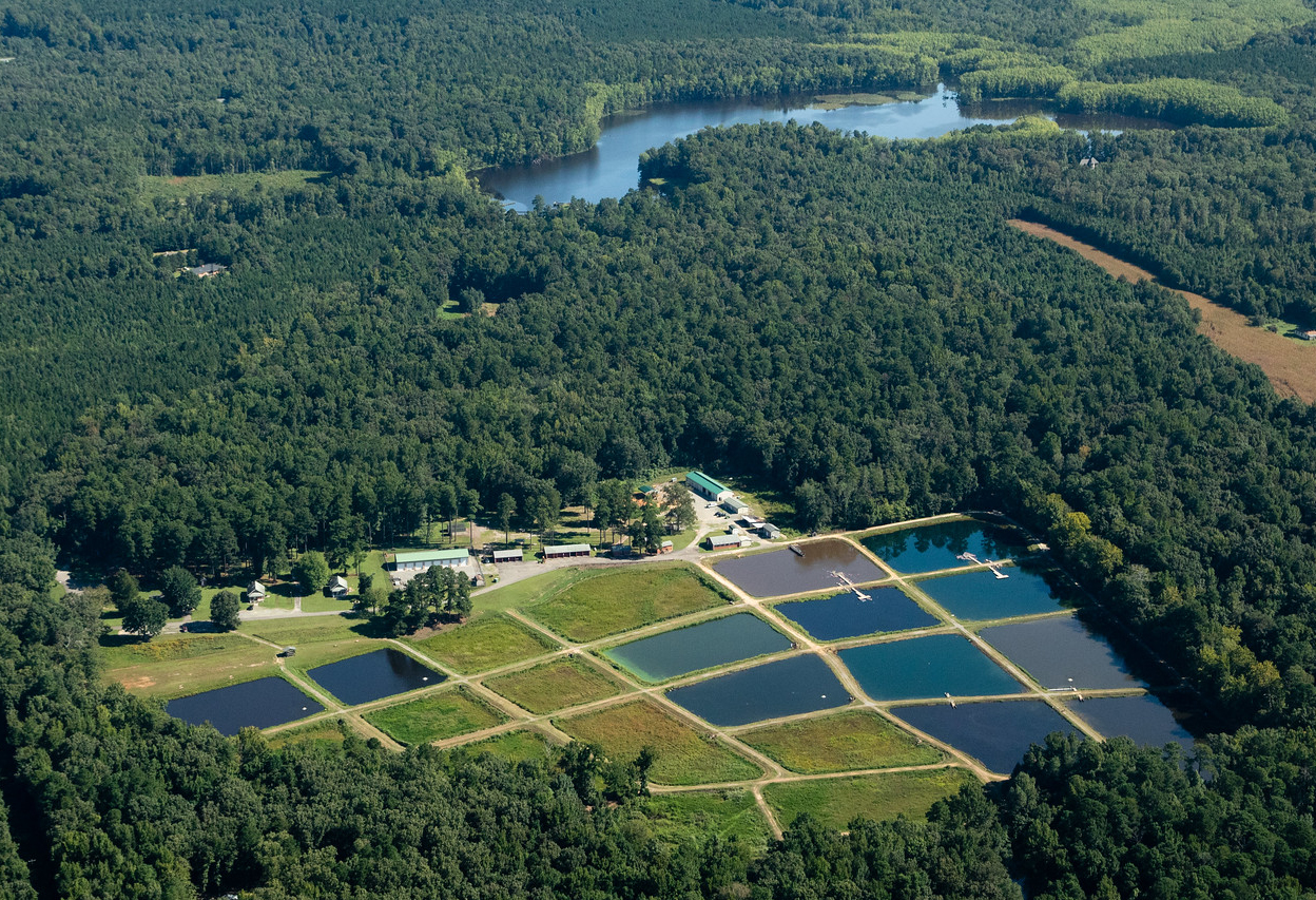 Harrison Lake National Fish Hatchery near Herring Creek, a tributary of the James River in Charles City County, Va., on Aug. 24, 2018. (Photo by Will Parson/Chesapeake Bay Program)