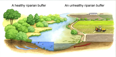 riparian-buffer-friendsofthechicago river